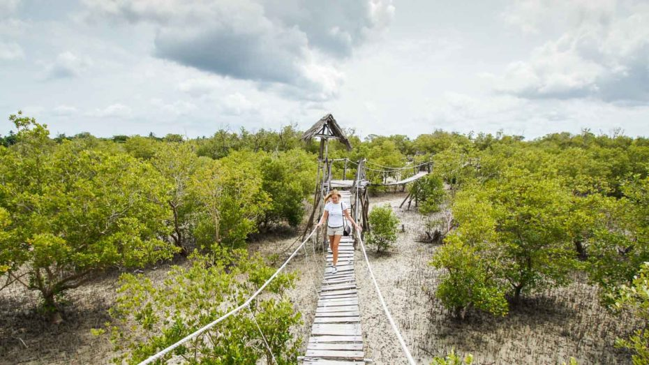 bridge over mangroves in Mida Creek