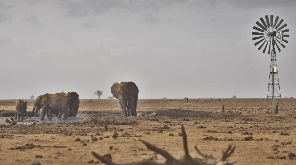 Elephants at Tsavo East during dry season