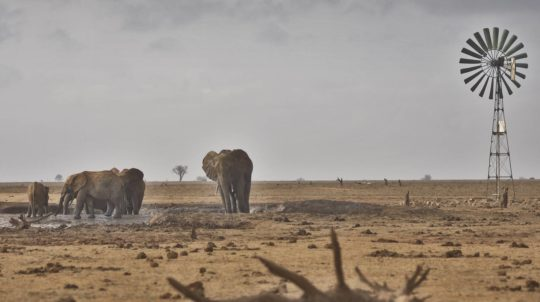 Elephants at Tsavo East during dry season