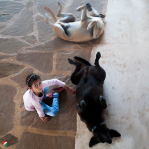 Ava training our dogs to play dead